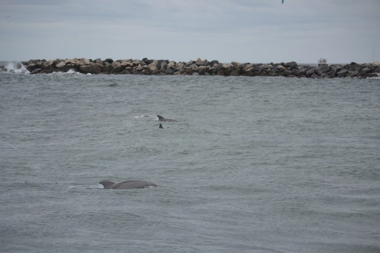 Dolphins, Things to Do in Panama City Beach Florida